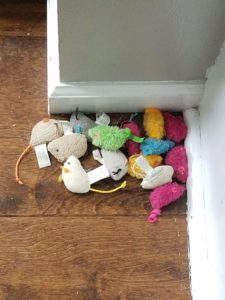Ripley's mice collection