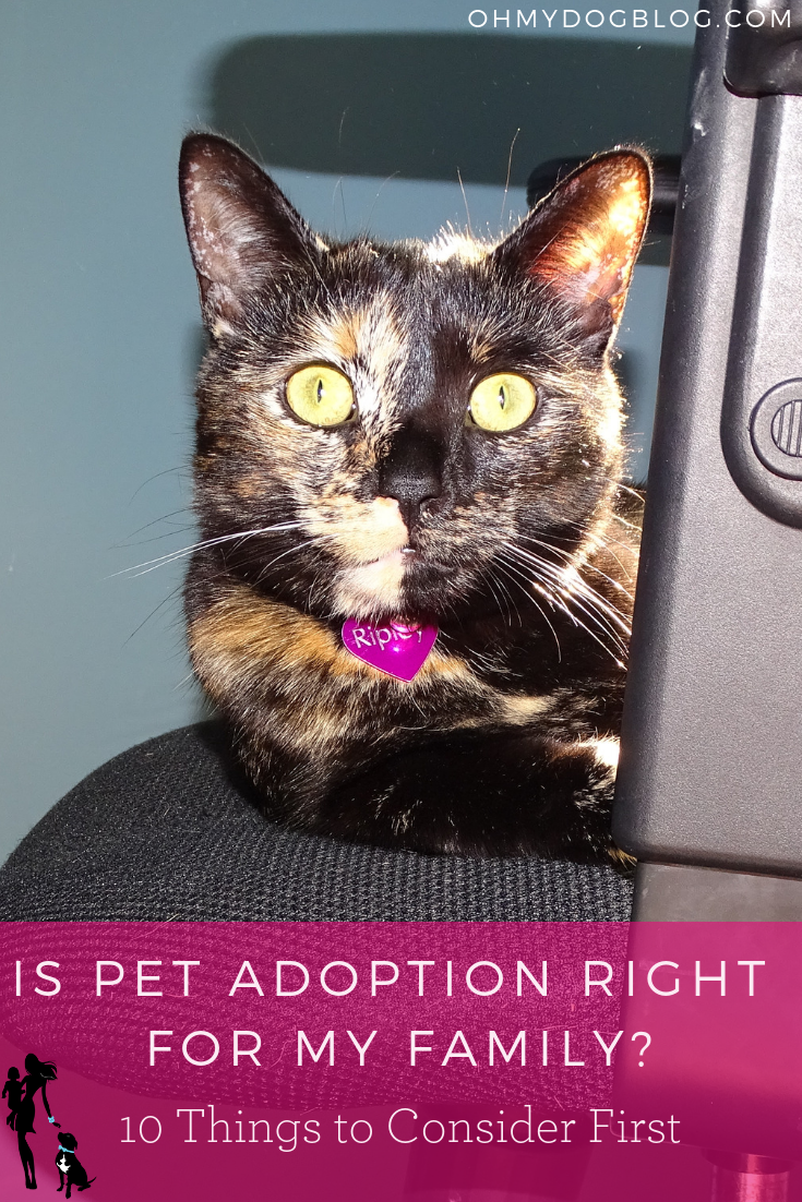Choosing a Pet_ Is adoption right for my family_ 10 things to consider first...