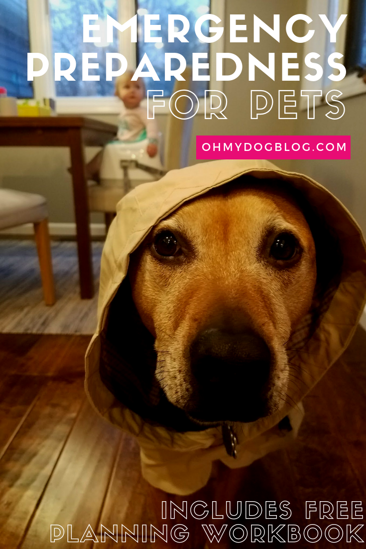 Emergency Preparedness for Pets   with free workbook download