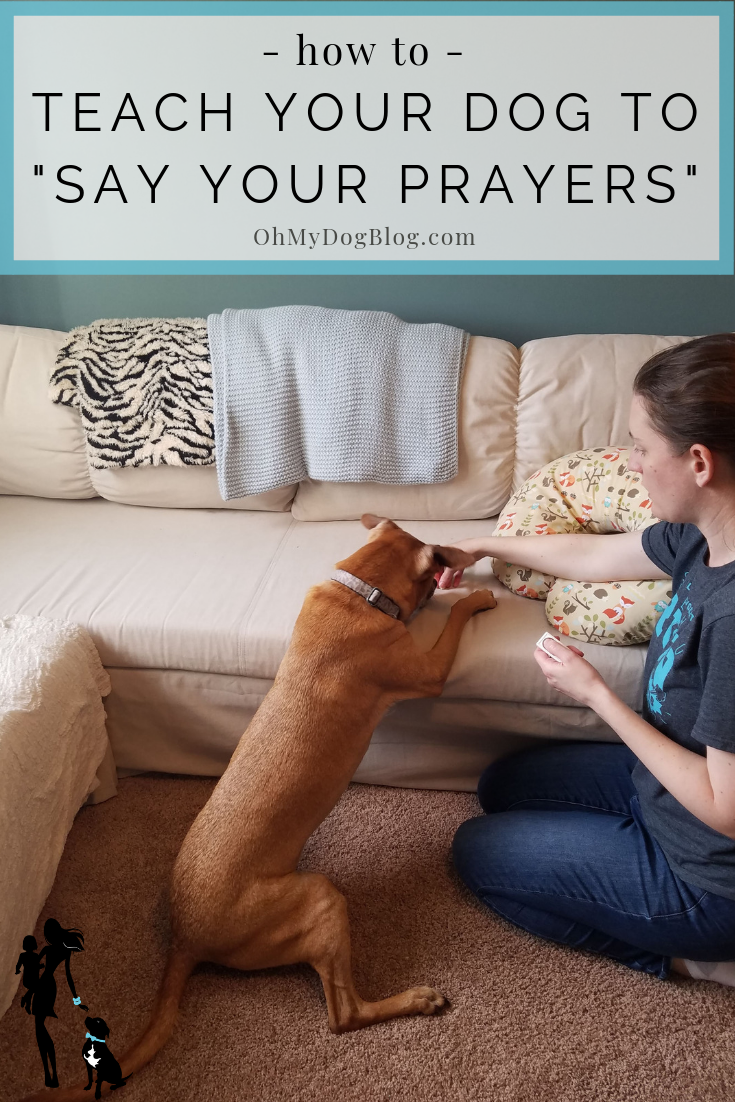 How to Teach Your Dog to Say Your Prayers _ OhMyDogBlog.com