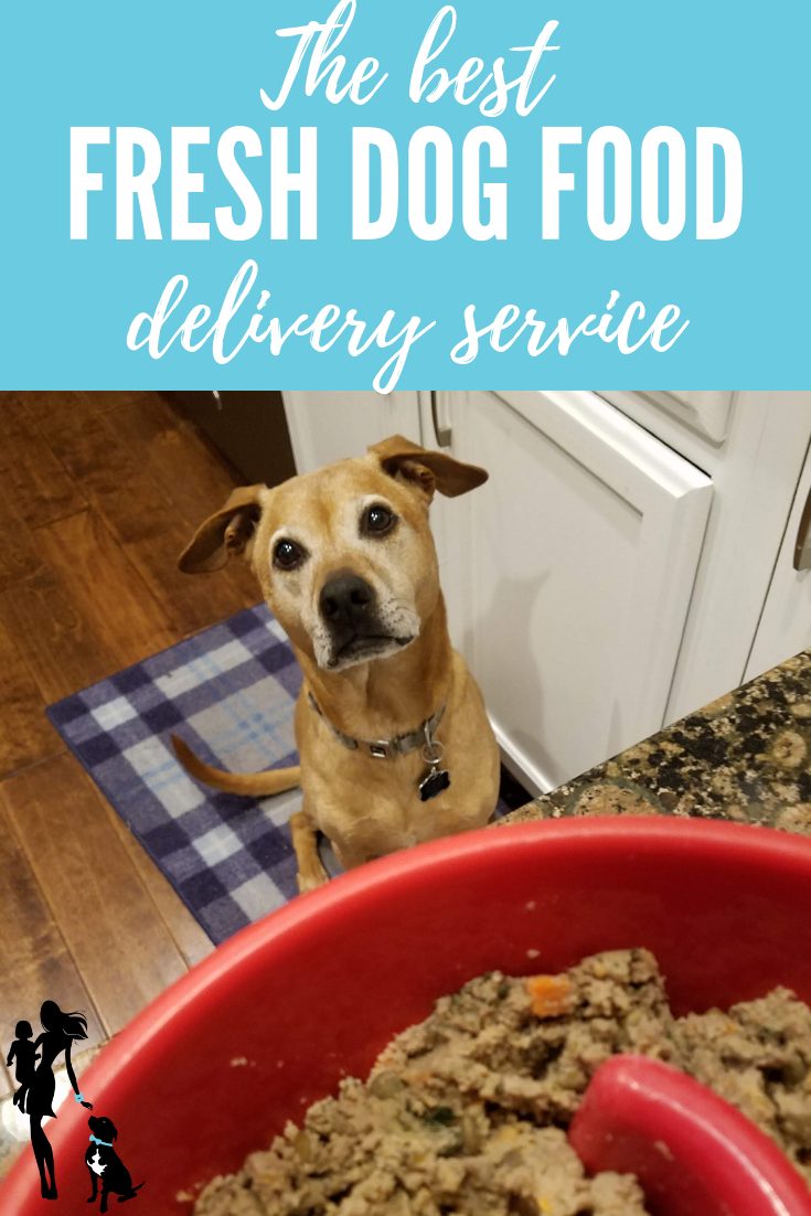 The Best Fresh Dog Food Delivery_ Health and convenience from The Farmer's Dog