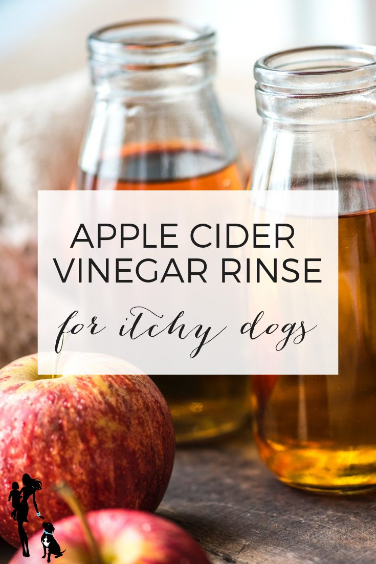 Apple cider vinegar rinse for itchy dogs