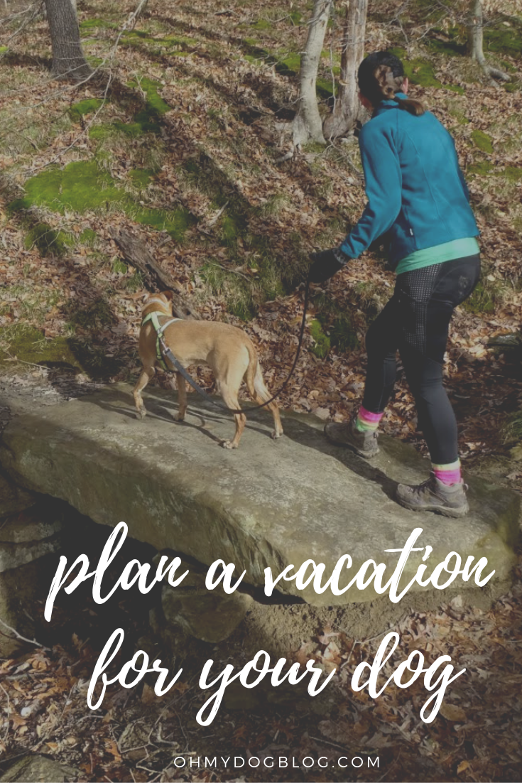 Dog-Friendly Vacations_ Plan your trip around your pup!