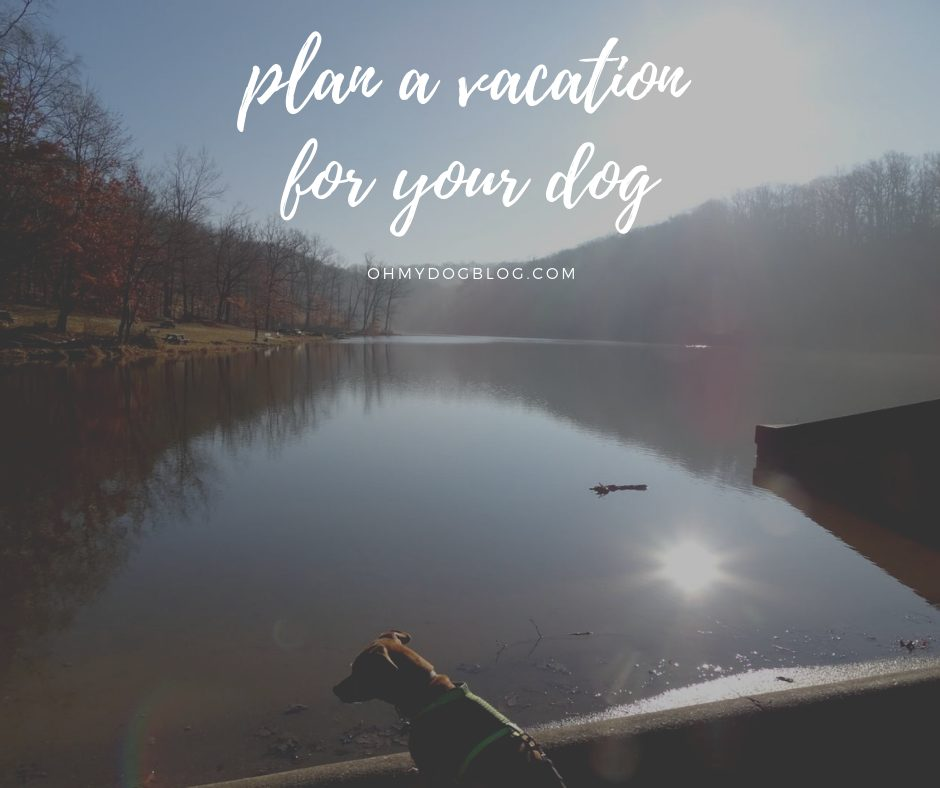 Plan a vacation for your dog