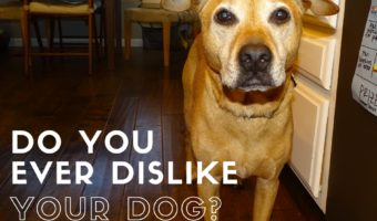 Do you ever dislike your dog?