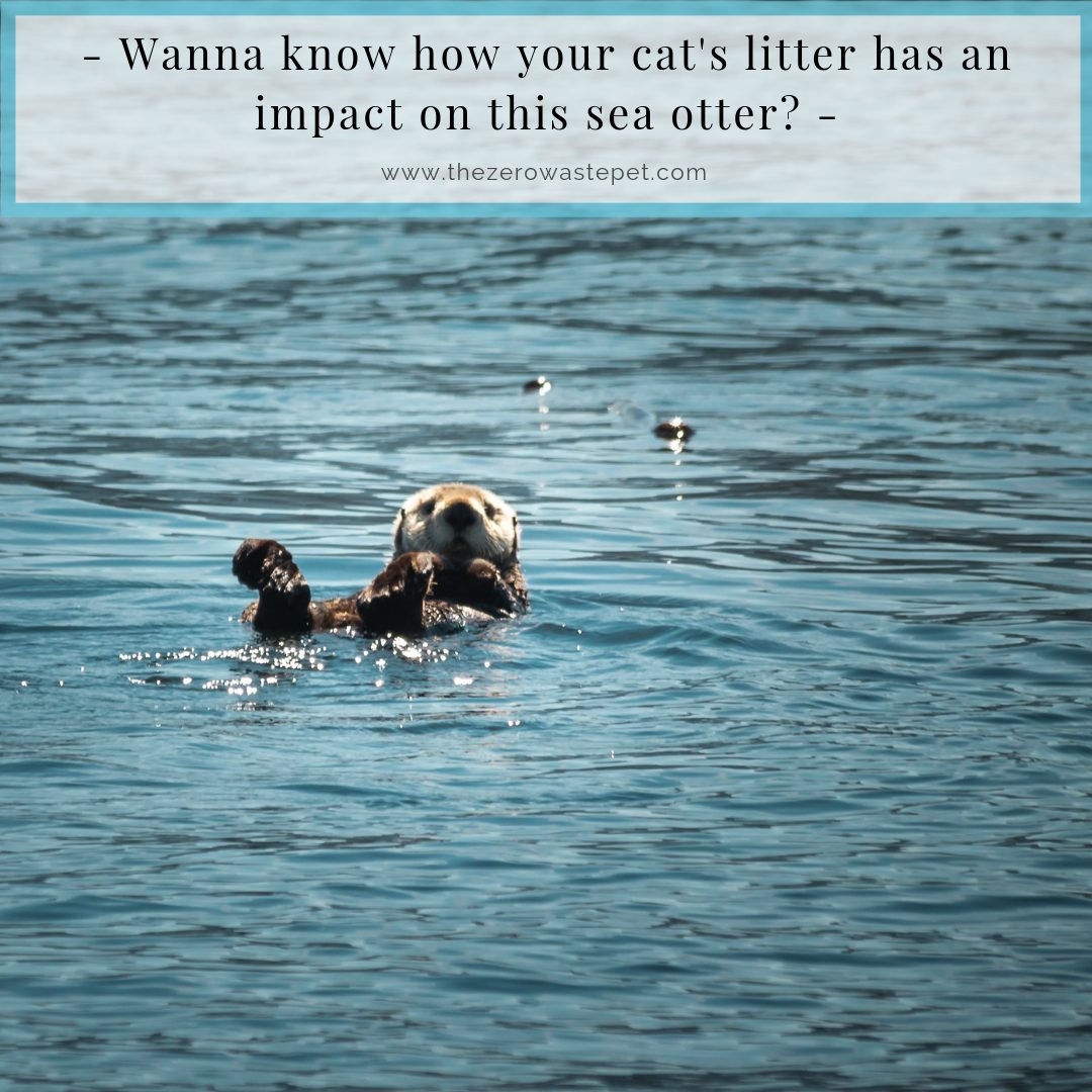 How to Dispose of Cat Litter... and why it matters to sea otters (1)
