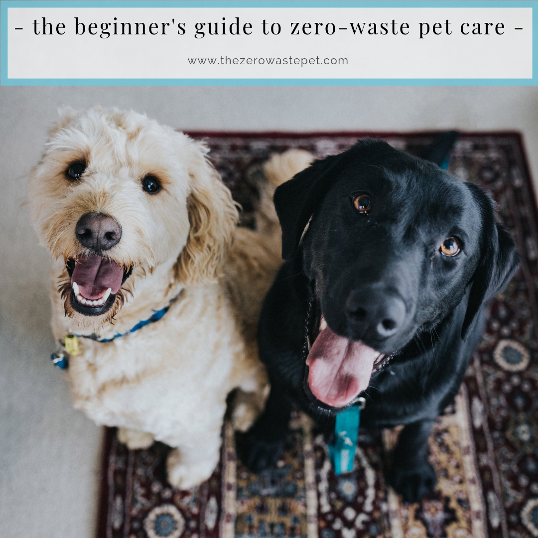 The Beginner's Guide to Zero-Waste Pet Care