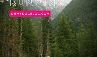 Running With Dogs: How to start trail running with your dog