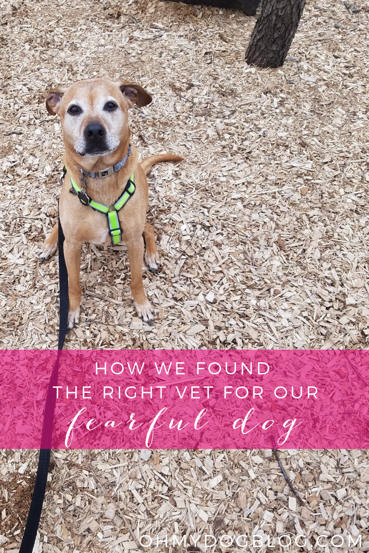How We Found the Right Vet for Our Reactive Dog