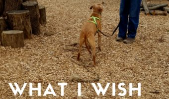 What I wish you knew about my reactive dog