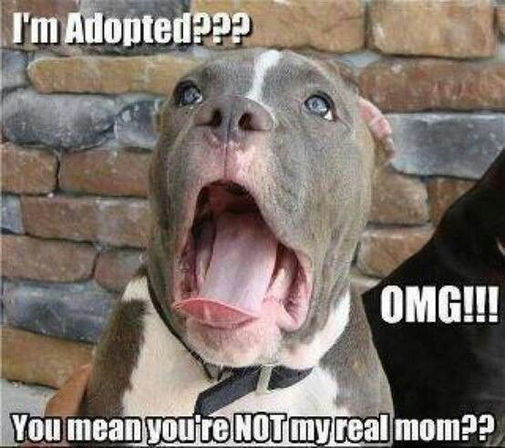 What Pet Adoption memes get WRONG