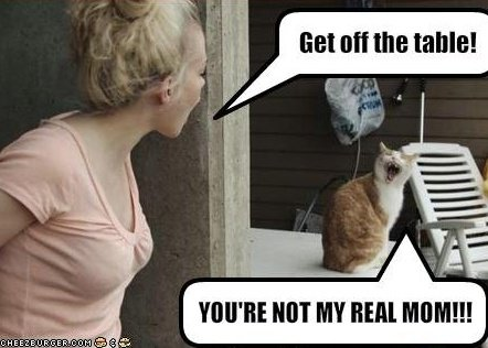 What pet adoption memes get wrong about moms