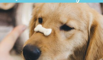 Peanut butter treats for kids + dogs to share
