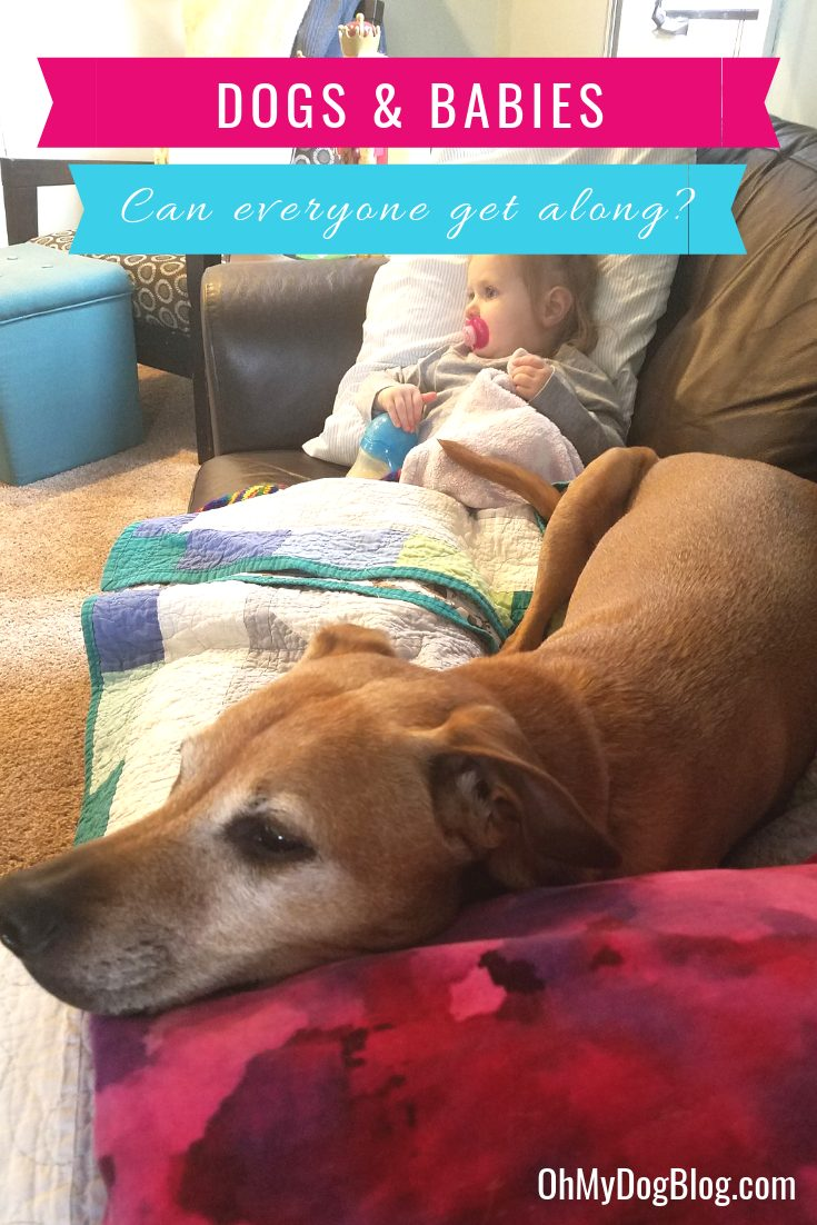 Dogs and Babies: Can everyone get along? Sure, it takes some safety strategies--and some common sense--but there's no reason your dog and your kiddos can't be best buds! Read on for how to make it happen!