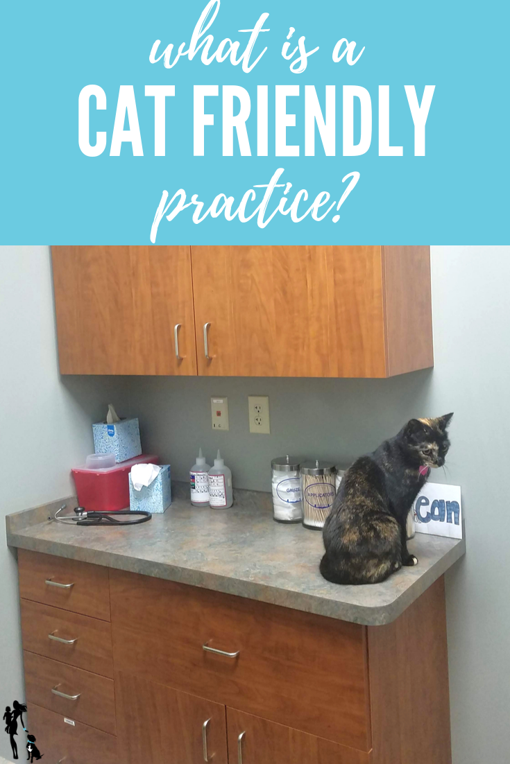 What is a Cat Friendly Practice? And does my cat need to go to one? This post explores what a CFP is and what makes it valuable.