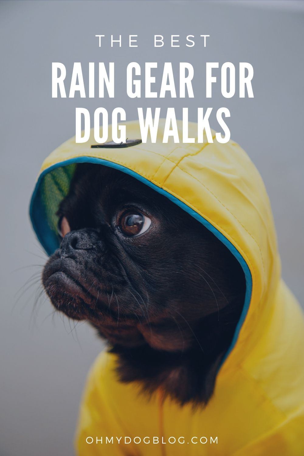 The Best Rain Gear for Dog Walks: Is there anything cuter than a pug in a yellow rain coat?