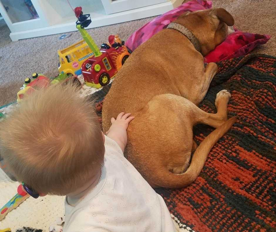 An eight-month-old baby girl with hearing aids pats her 10-year-old dog.