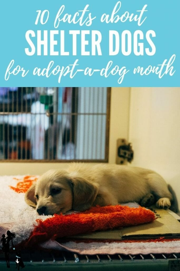 A puppy sleeping on a cot in an animal shelter. The text reads: 10 facts about shelter dogs for adopt-a-dog month.