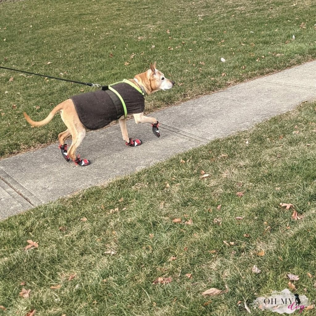 A pit bull mix in a brown jacket and red boots run along a sidewalk.