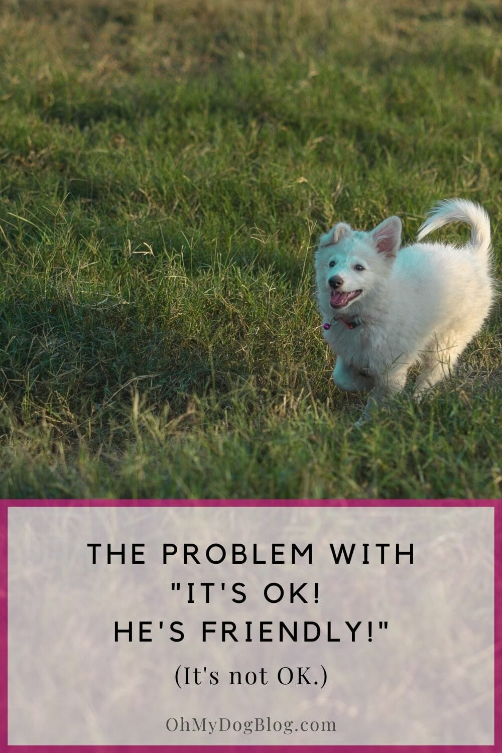 "A white fluffy dog runs through a field of grass. The text overlay says: The problem with, ""It's OK! He's friendly! (It's not OK.)"